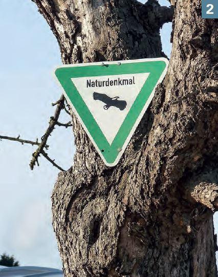 NaturdenkmalWN